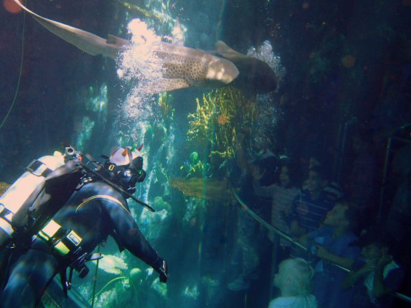Behind The Scenes My Work As A Volunteer Aquarium Diver