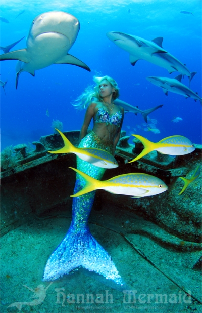 Miss Scuba: How does a Mermaid end up with a Shark Hickey?